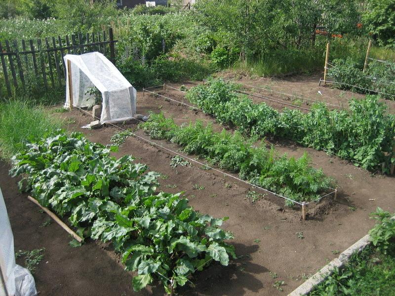 Сад огород своими руками видео фото