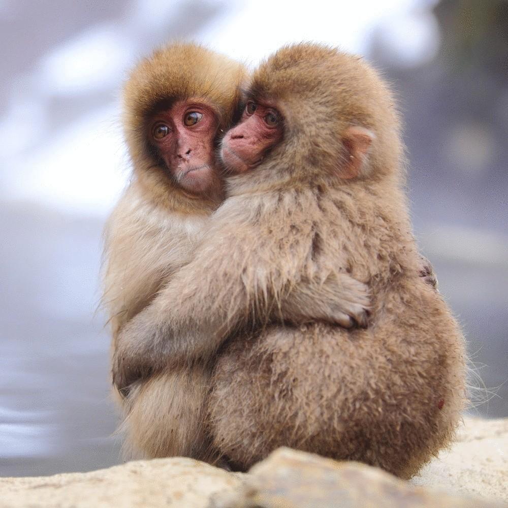 Прикольные картинки про животных и любовь, лет милиции