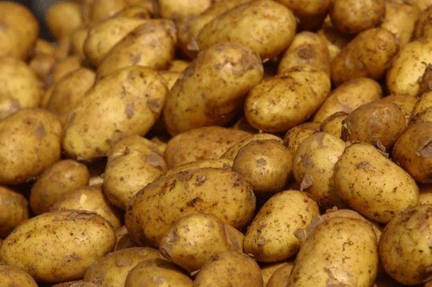 Ученые прогнозируют хороший урожай картофеля в Свердловской области