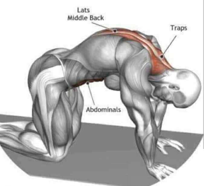 Картинки по запросу Как простым способом можно решить проблему болей в спине