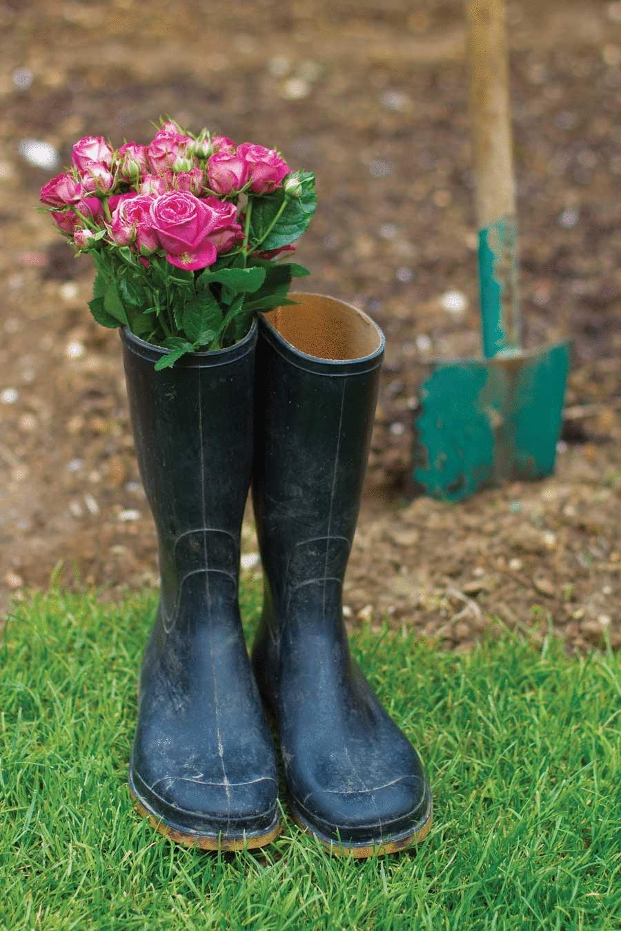Розы : выращивание из семян купленных в Китае 91