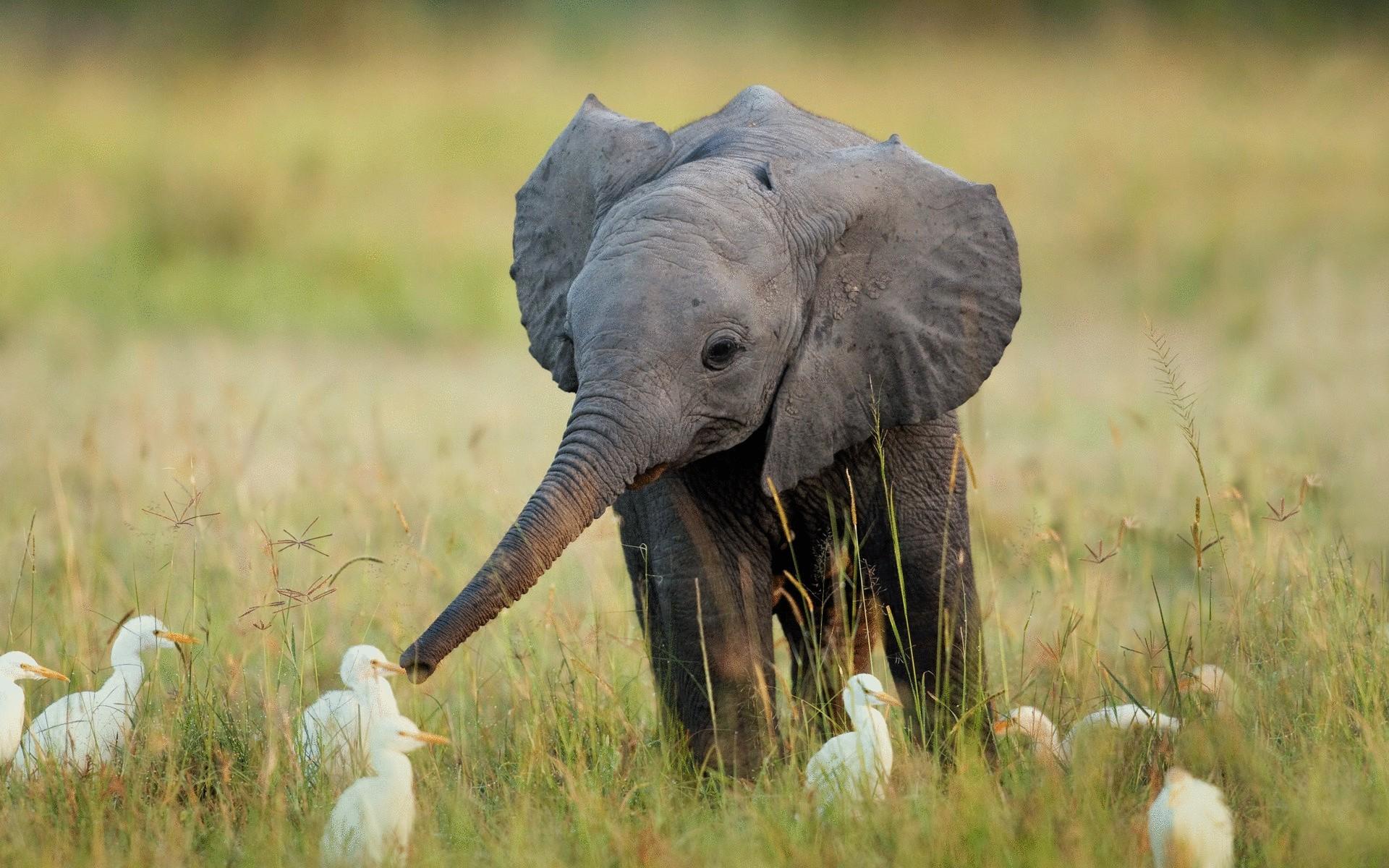 Слон на природе картинки