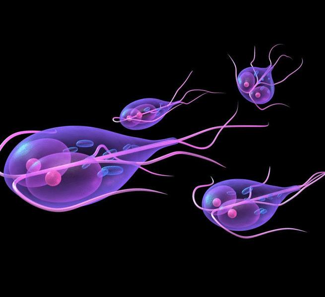 одноклеточные паразиты в теле человека