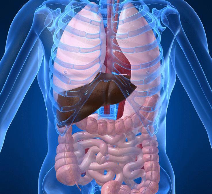Токсины в организме – симптомы