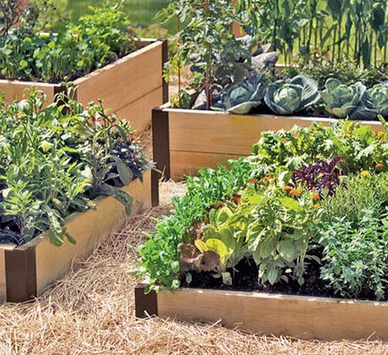 Сад и огород тверь