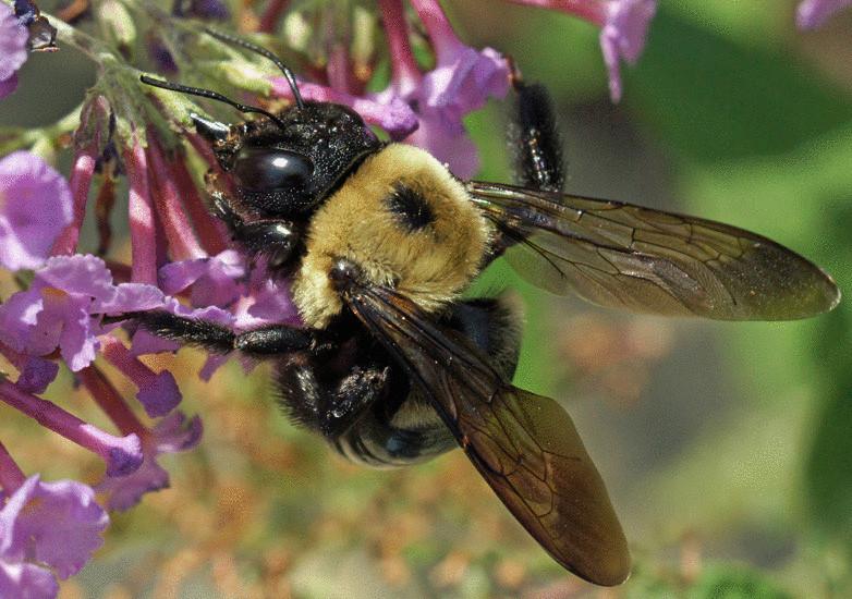 Влияние пчел-опылителей на урожайность