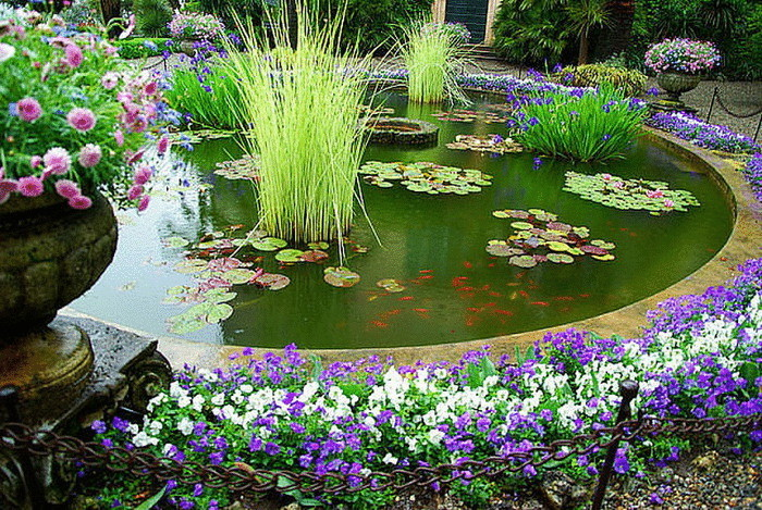 Вечерние цветы для вашего сада
