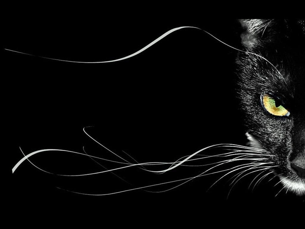 Кладбище кошек фото и
