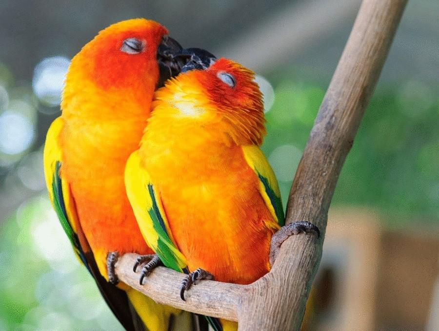 Картинки целующиеся птицы