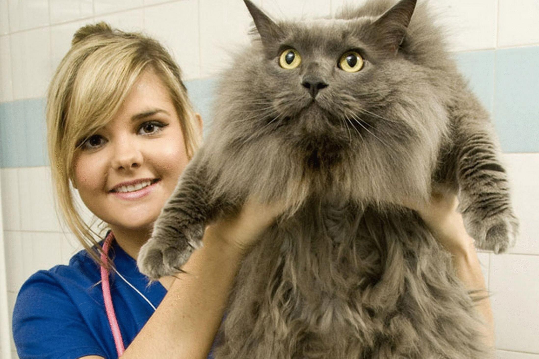 аллергия на шее у кота