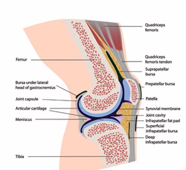 Апофизарные суставы это локтевой сустав эластичный бинт