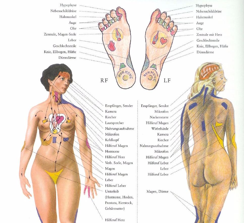 форма биологически активные точки на теле человека фото с описанием другие любые