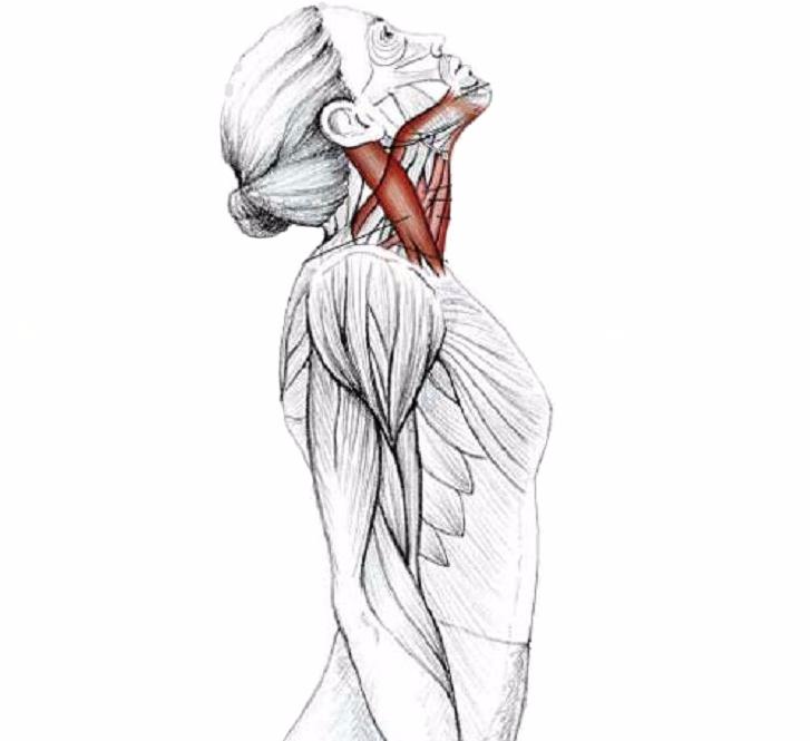 Комплекс упражнений для позвоночника ниши