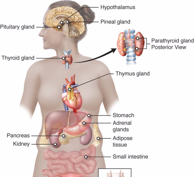 Основные проблемы женского здоровье