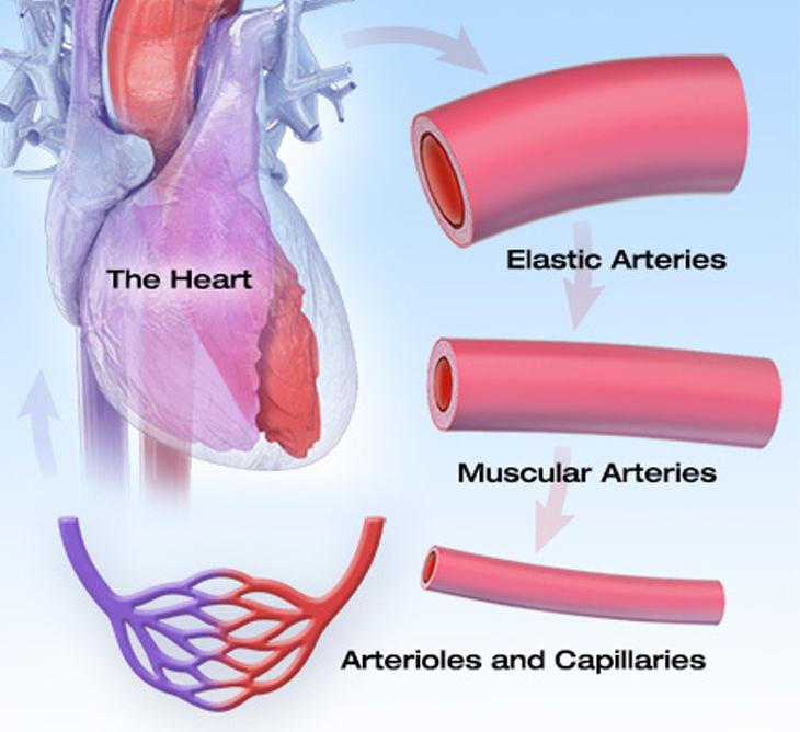 Гипотония – симптомы и причины сниженного давления крови