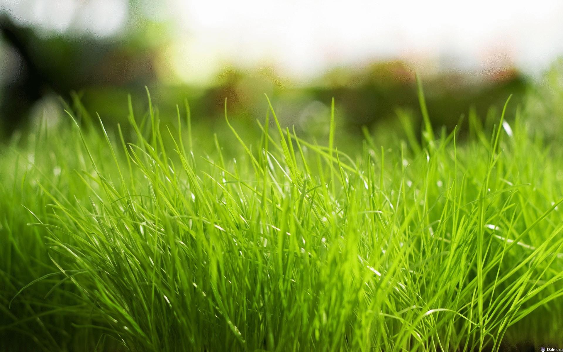 К чему снится зеленый газон