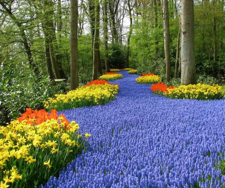 Кекенхоф цветов