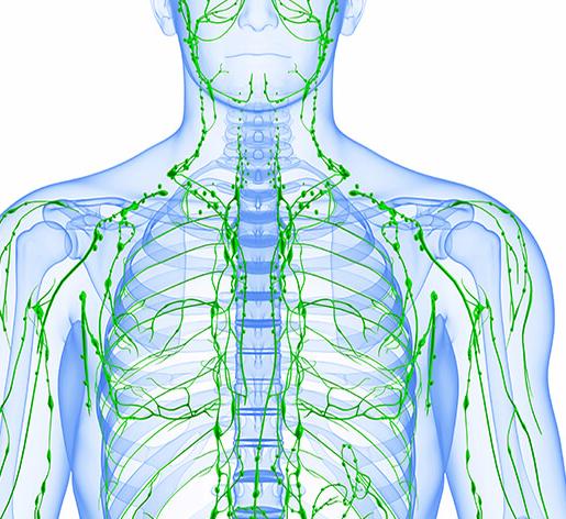 Как улучшить движение лимфы в организме с помощью лимфодренажа