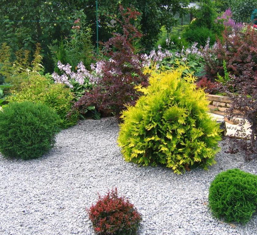 Гравийный сад на дачном участке своими руками (20 фото)