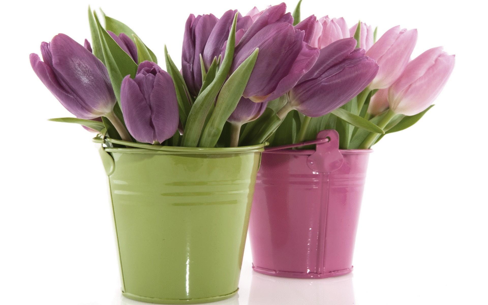 природа цветы ведро  № 464587 загрузить