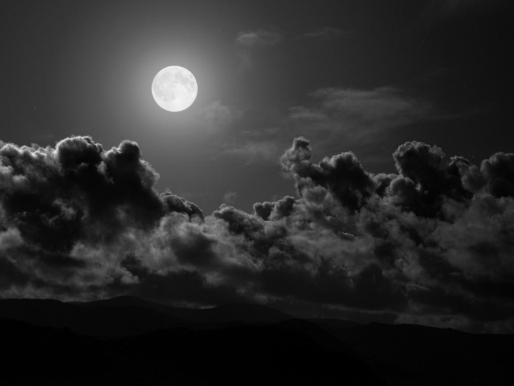 рекомендации, 22 подсказки ночное животное ерш для