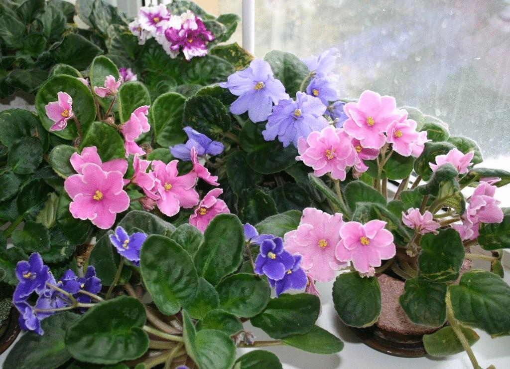 Натуральные удобрения для комнатных цветов.