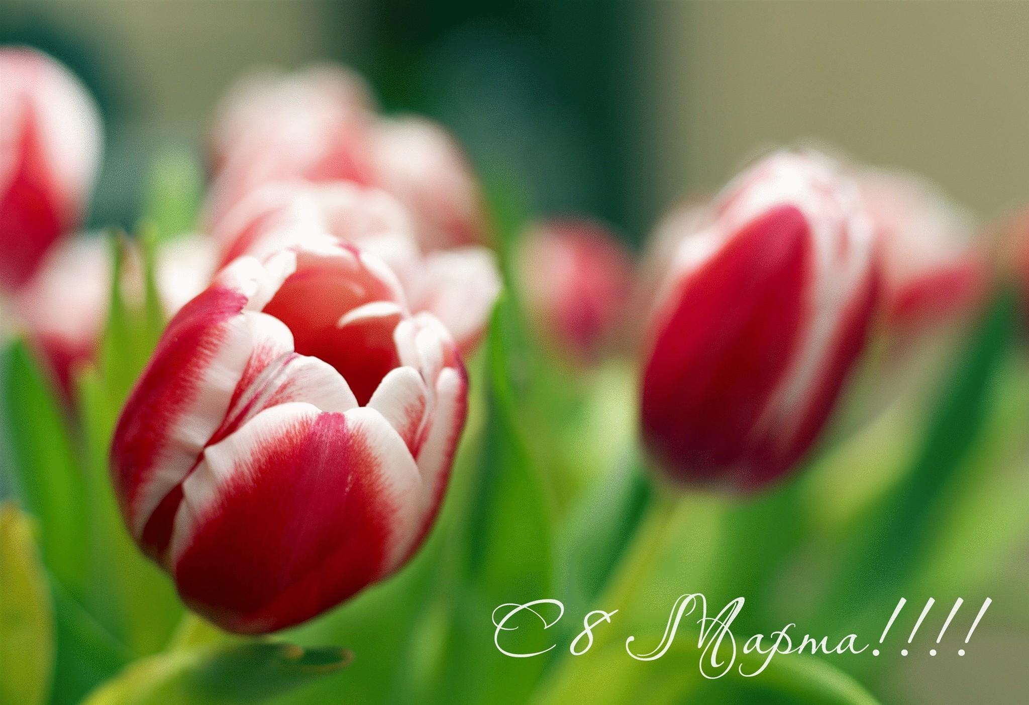 фото открытки праздник 8 марта здесь заслужил