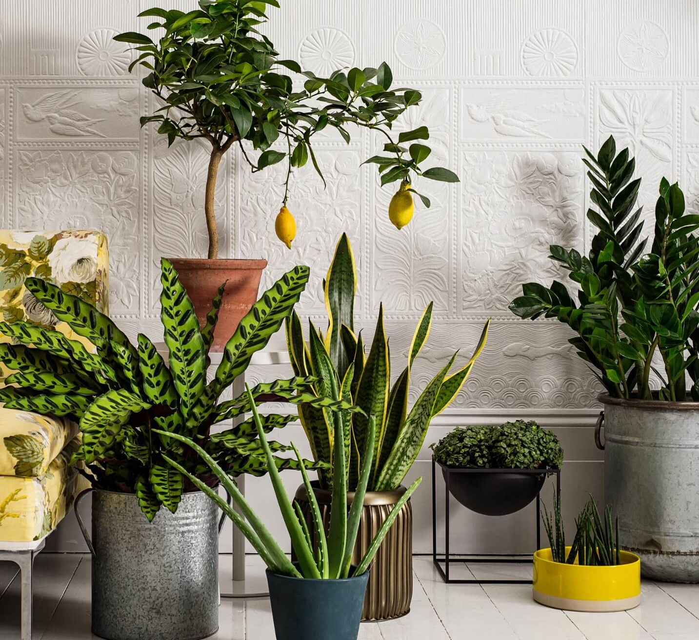 Все полезные домашние цветы