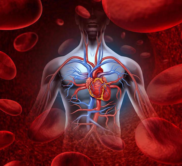 очищение крови от паразитов