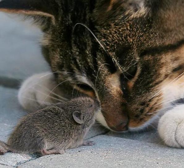 Зачем кот приносит