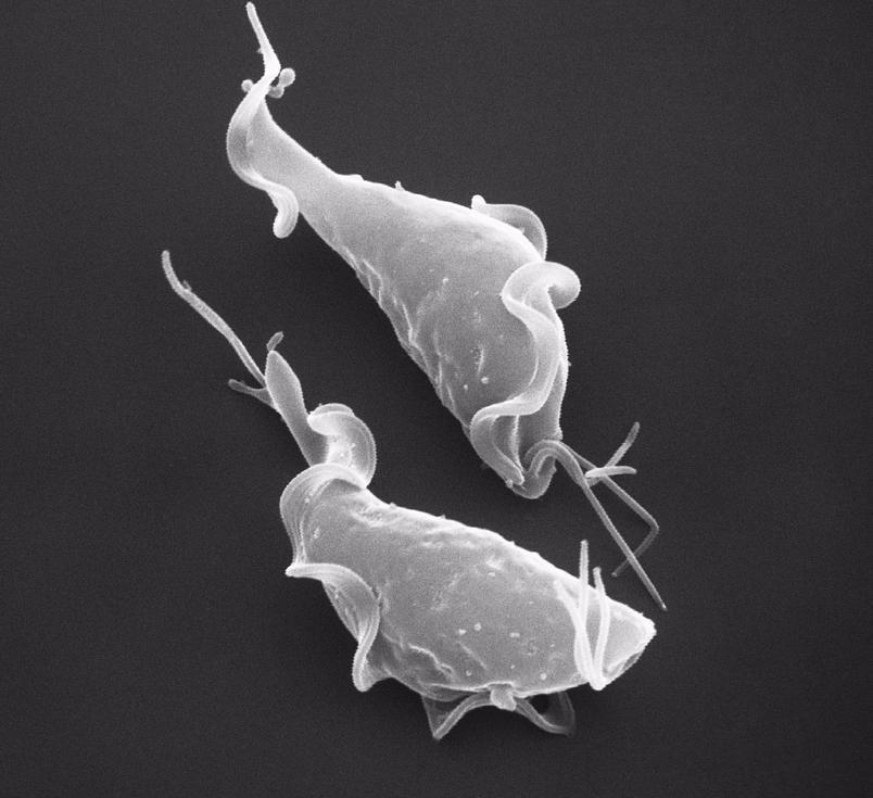 асд 2 от паразитов