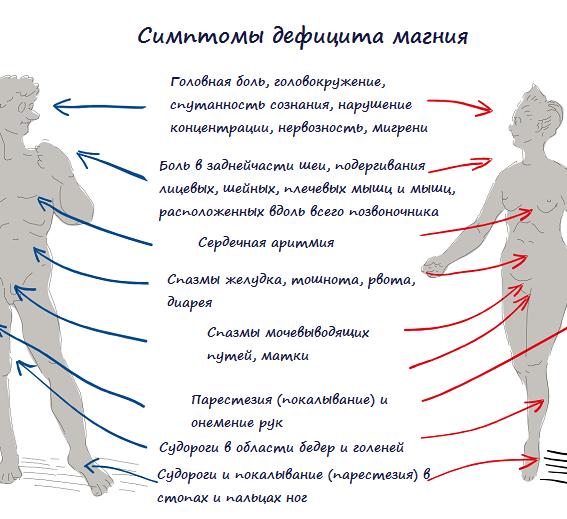 Как проверить магний в организме человека