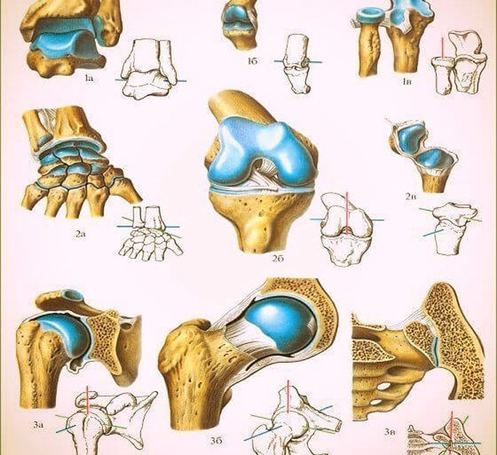 Что делать если болят колени при приседаниях