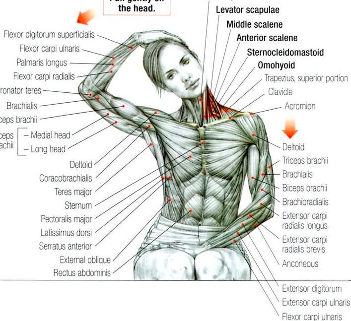 Боль в спине межпозвонковая грыжа
