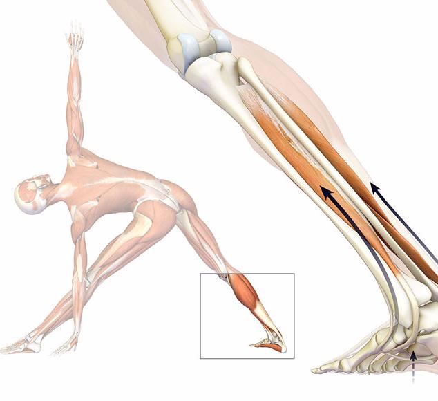 Как сделать свои мышцы эластичнее 200