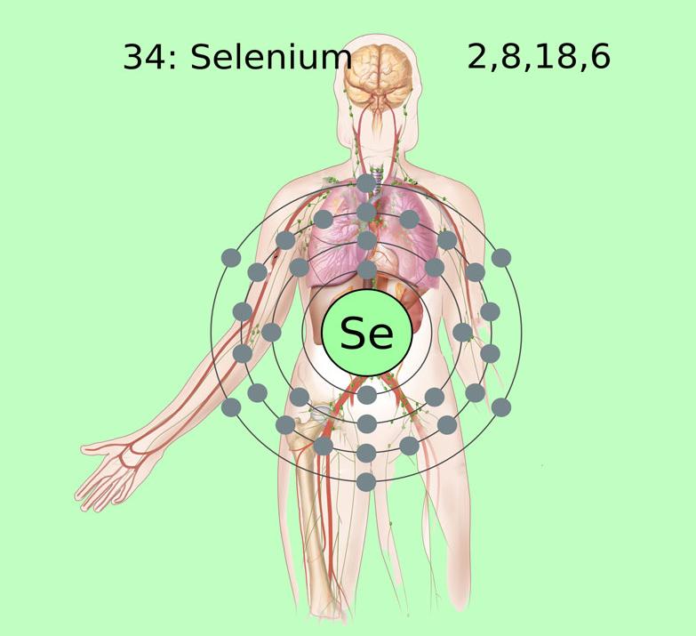 Селен — микроэлемент долголетия и здоровья