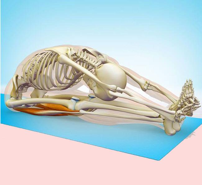 Комплекс упражнений для растяжки спины и позвоночника