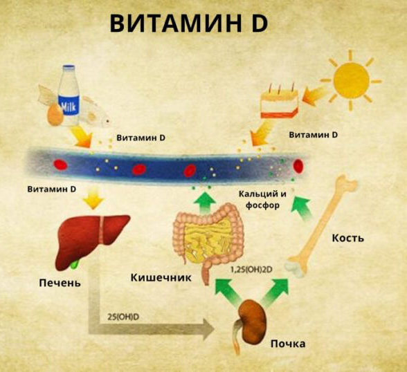 ТОП-5 признаков дефицита витамина D