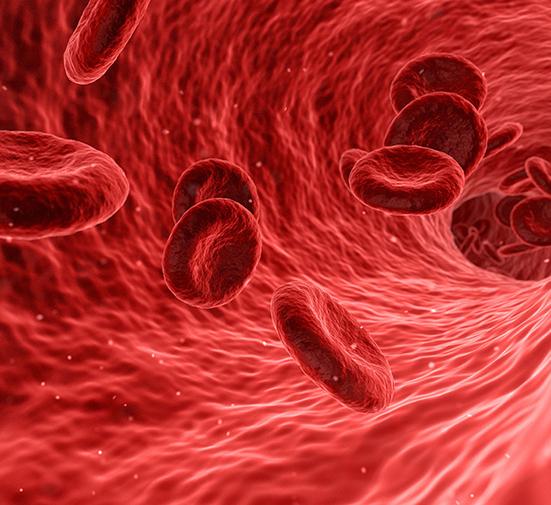 Низкий гемоглобин – симптомы, причины, последствия для человека