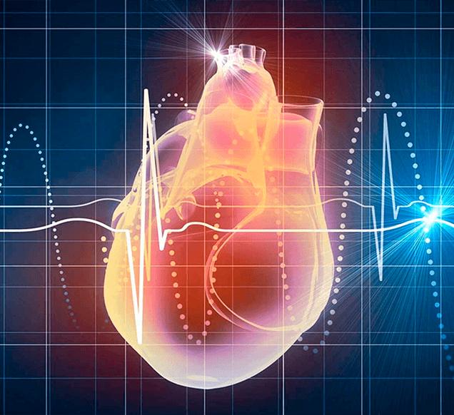 Частота сердечных сокращений (ЧСС) во время тренировки