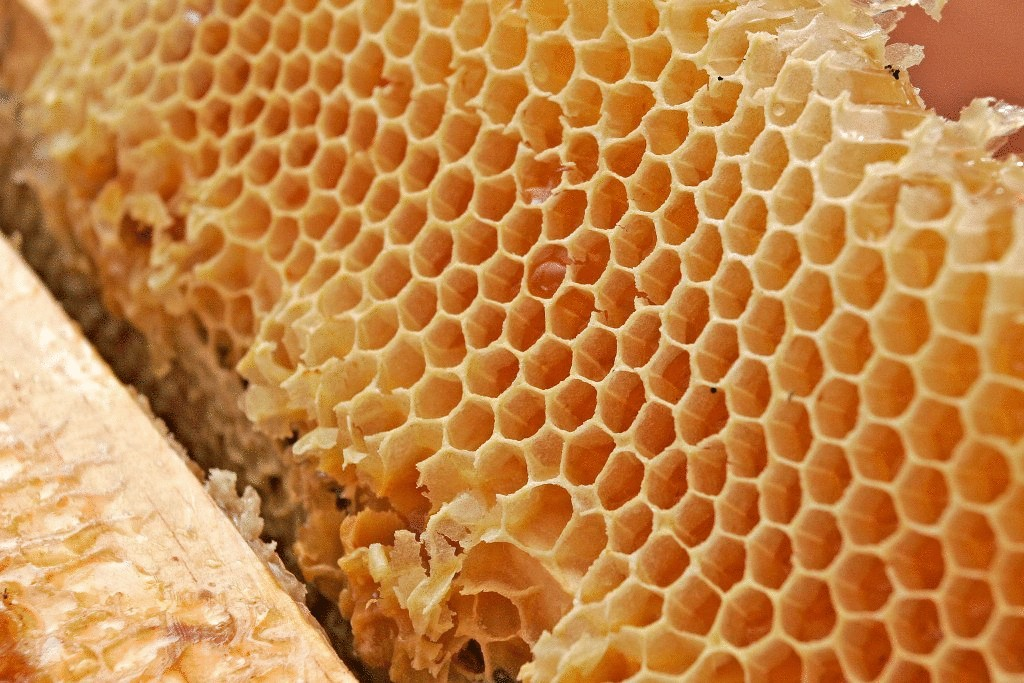 фото соты медовые