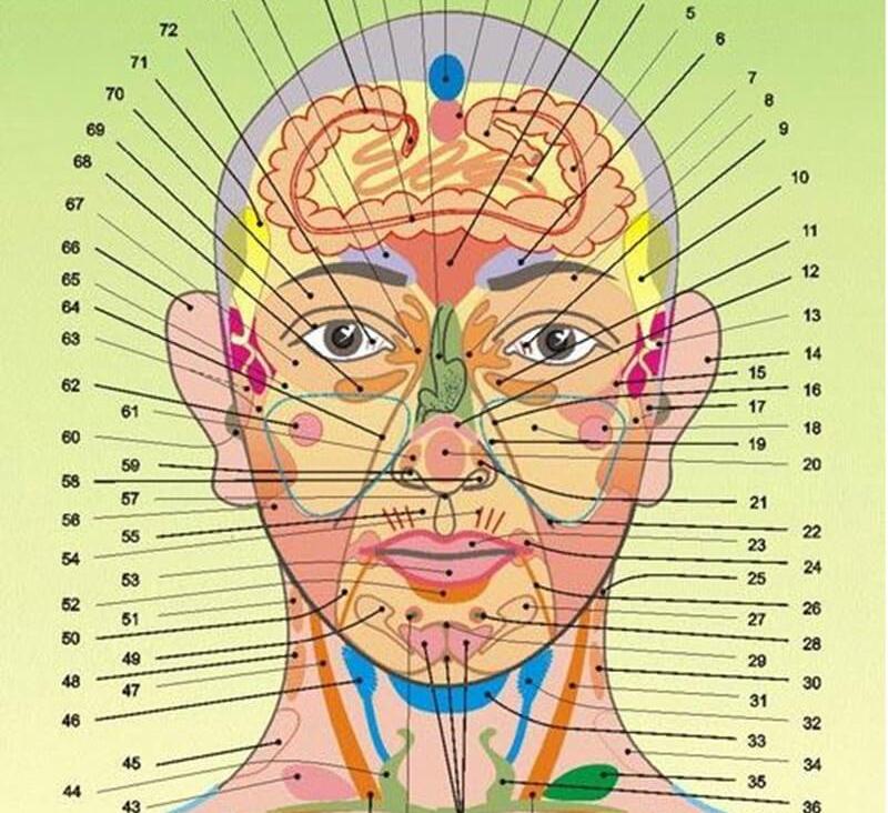 С каким внутренним органом связан нос