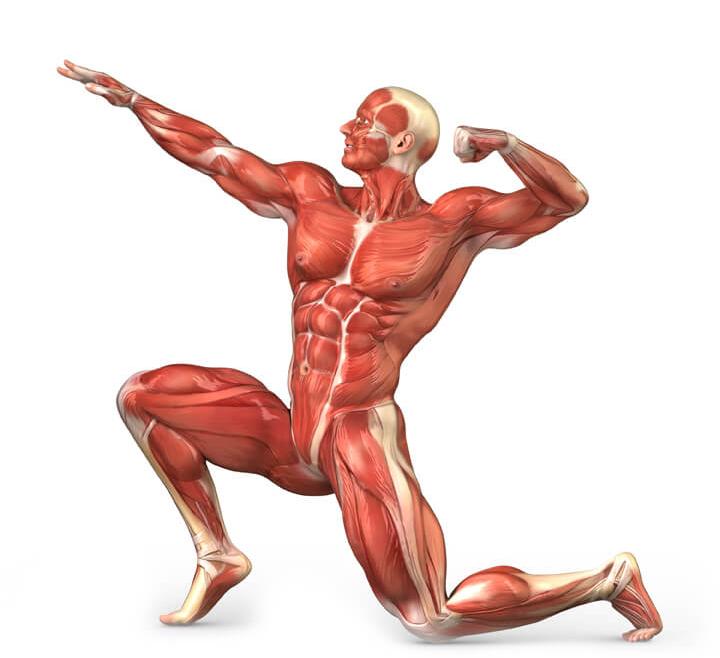 Прикольные картинки мышцы, закатом