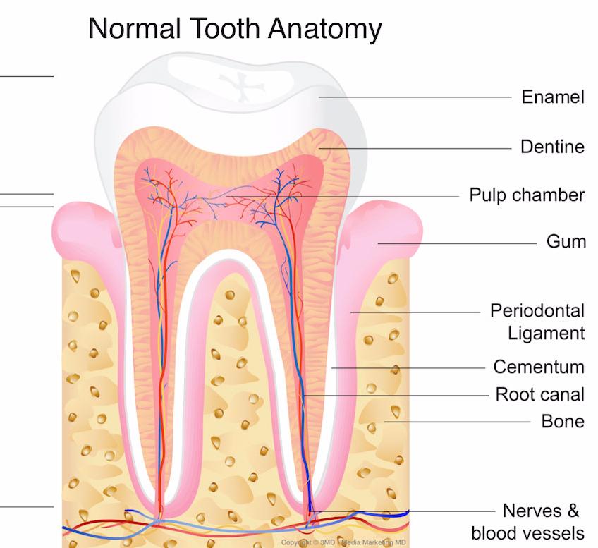 Психосоматика болезней зубов и десен. Психосоматика зубной боли, стоматита и других проблем ротовой полости: причины и лечение