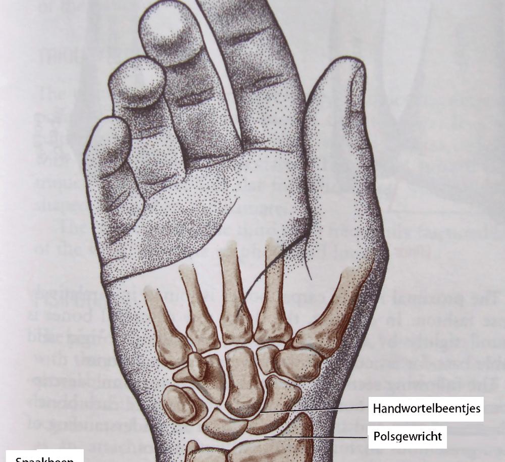 Болят суставы пальцев usb эффективное средство для суставов при повышенных физических нагрузках