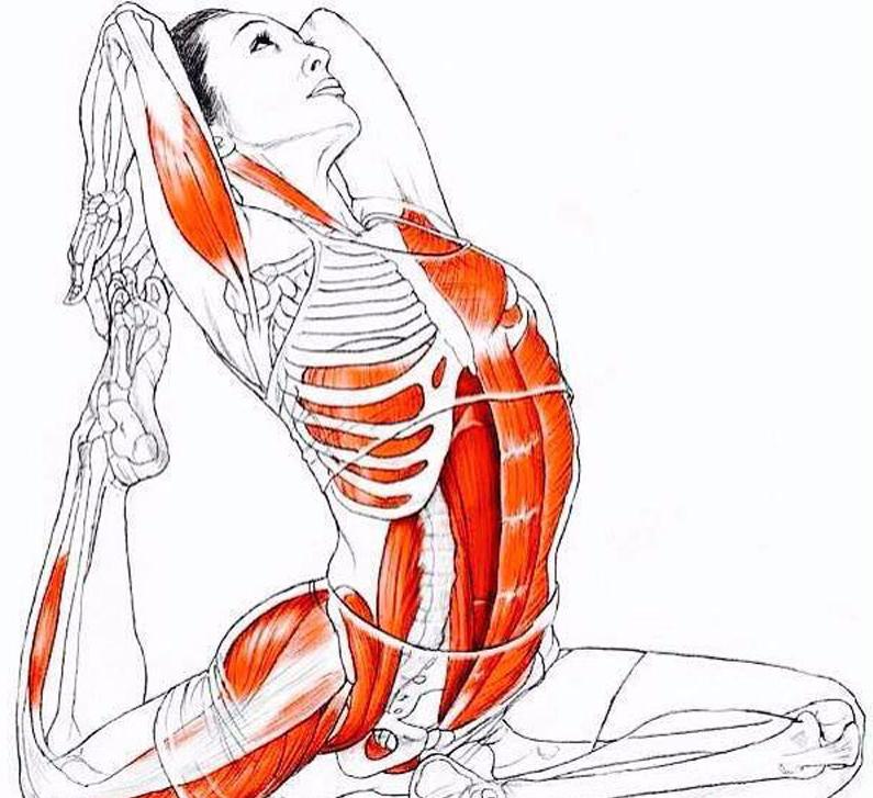 данной упражнения для брюшных мышц в картинках простой