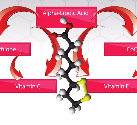 Альфа липоевая кислота для чего нужна женщинам