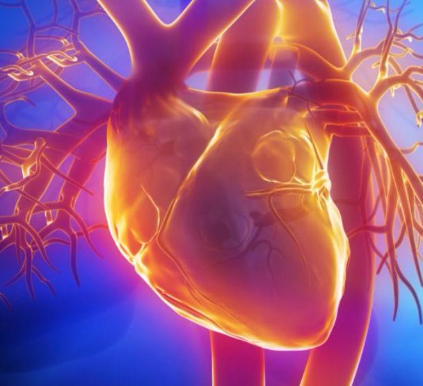 Причины возникновения сердечных заболеваний
