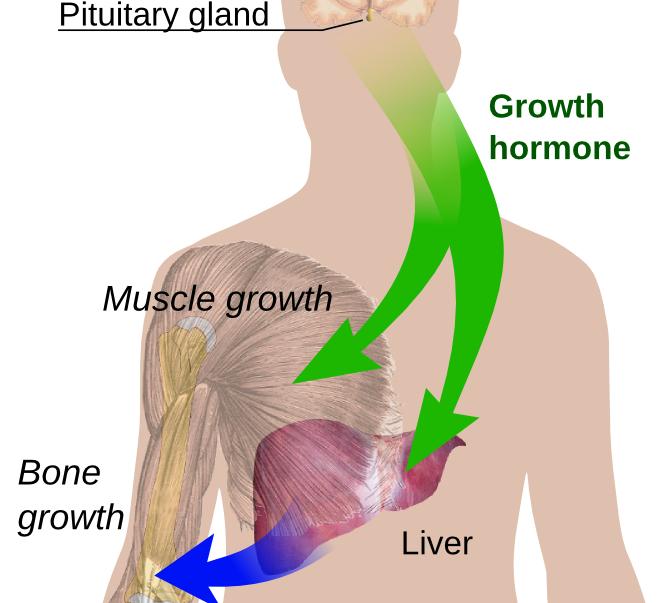 Народные средства  восстановления гормонального баланса