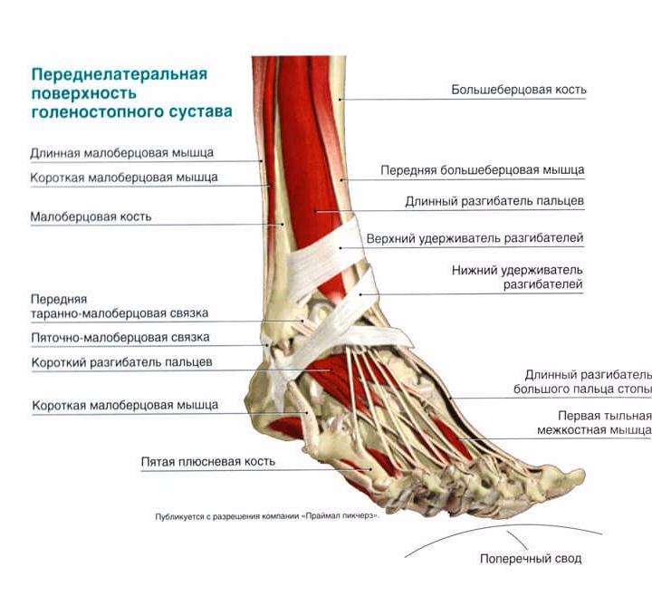 Сустав стопа препараты для лечения суставов рук и ног